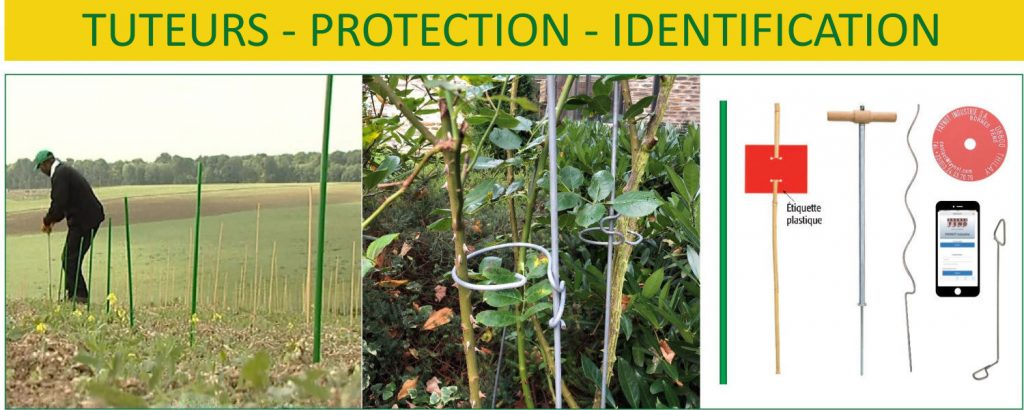 tuteurs protections identifications